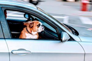 5 Porad jak podróżować ze zwierzakiem